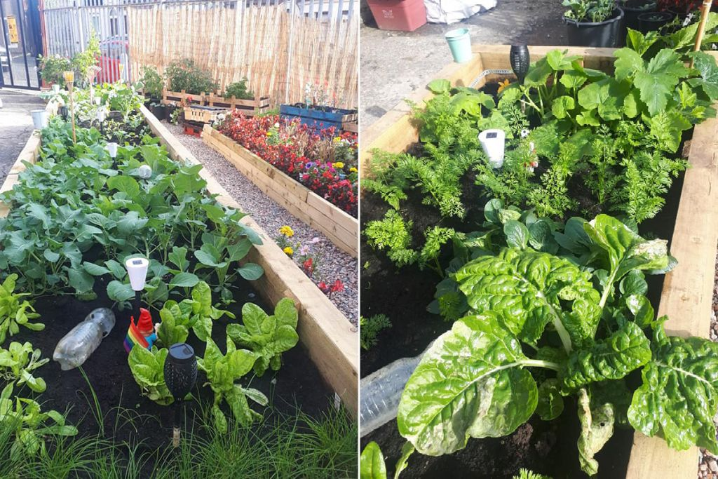 NWP supports west Belfast gardening group to 'green' waste space