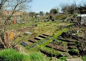 Annadale Allotments