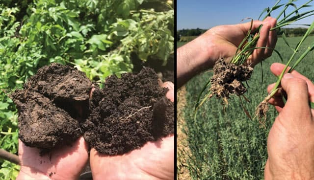 Circular economy: Compost critical to the future of soil health