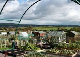 Vita Allotments, Castlereagh