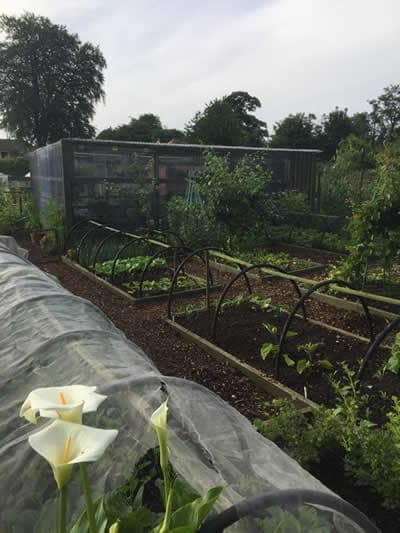 Belmount Allotments